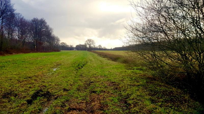 Landschaft Moor Saterland